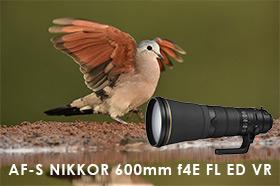 Nikon-news_-lens_01