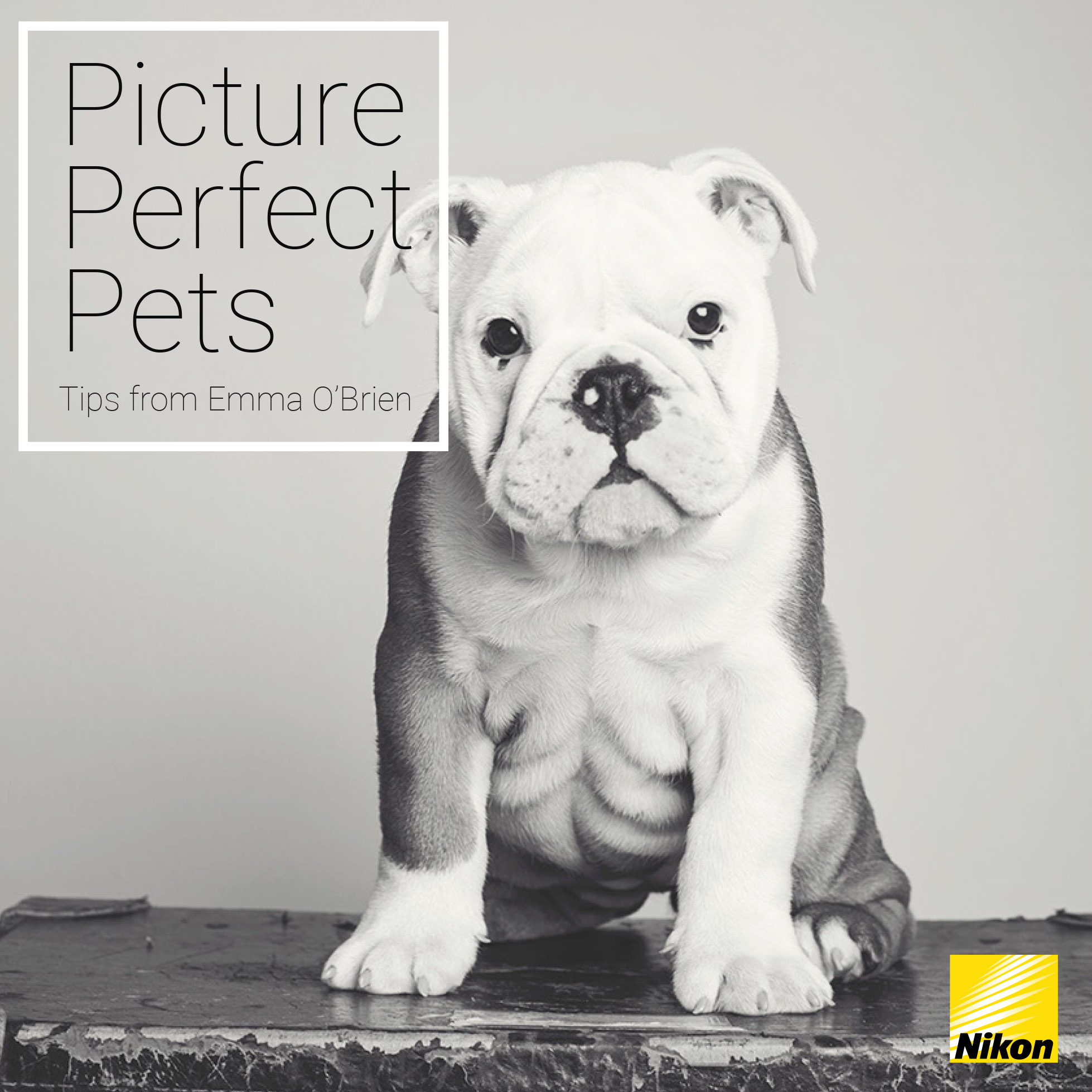 Picture perfect pet with Emma