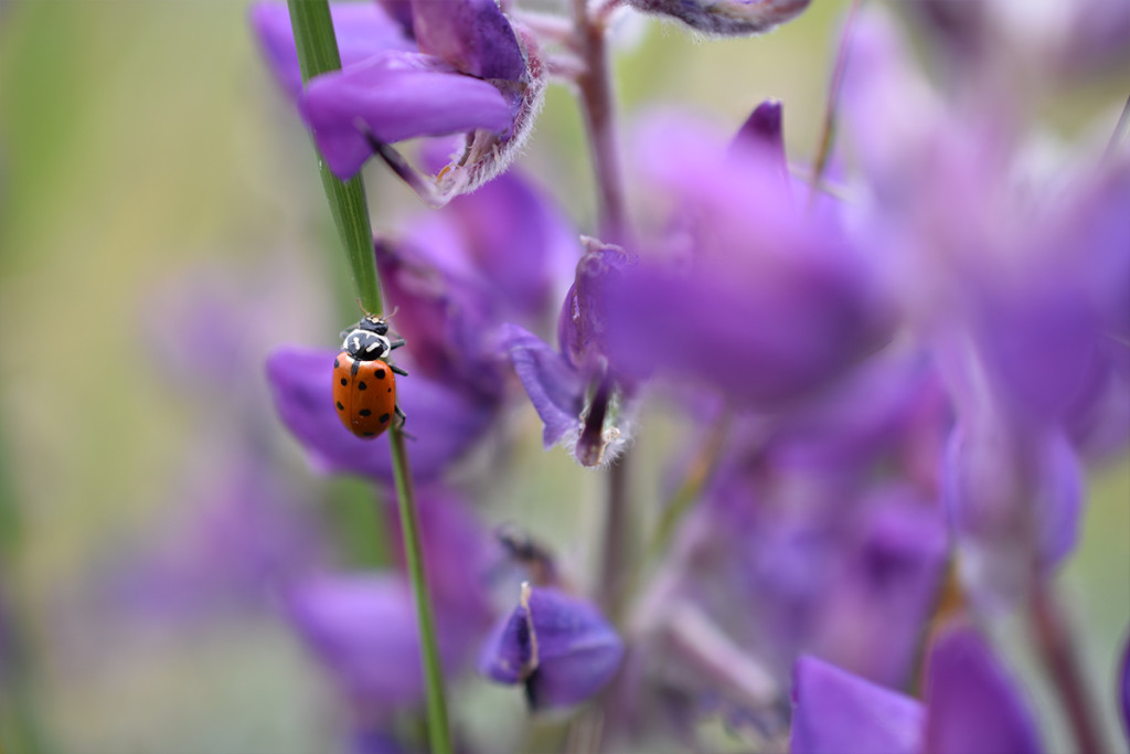 nikon-digital-slr-d3400-sample-lady-beetle