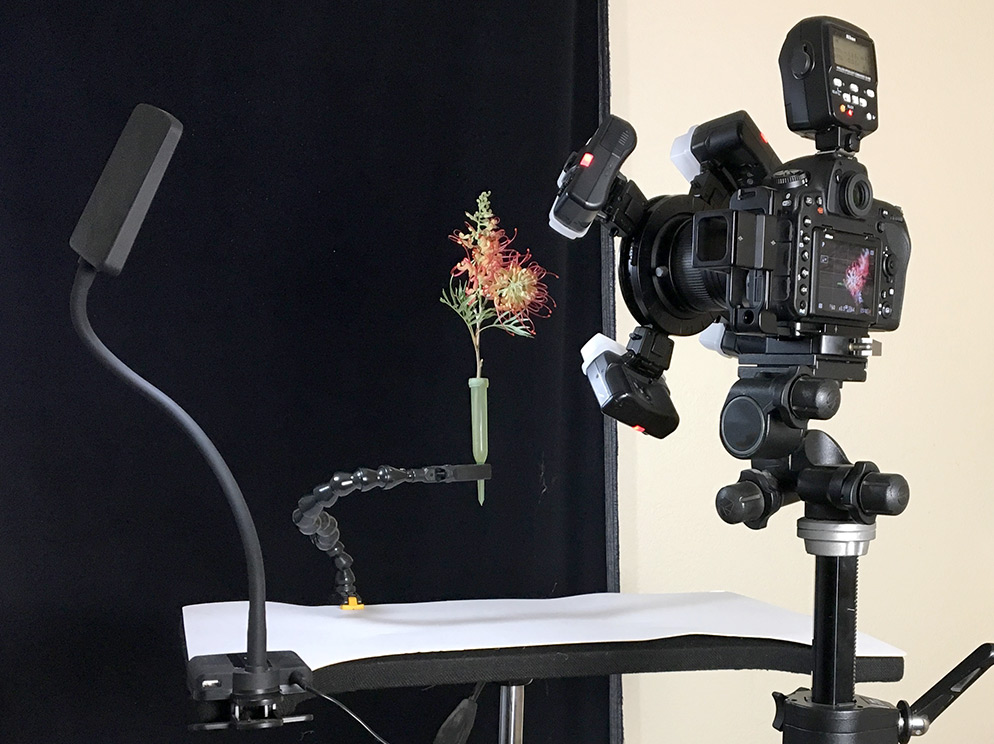"David Leaser's home studio setup with the D850 and 60mm Micro NIKKOR, SB-R200 Speedlights and the SU-800 Commander in place. Note the LED modeling light at left, clamped to an inexpensive tripod, which he uses during focusing, then shuts off before photography begins. He uses Wimberley PP-200 plant clamps ""to keep the plants steady and position with precision,"" and floral water tubes for single stem cut flowers to keep them hydrated. All the photos with this article were taken with the D850 and the AF-S Micro NIKKOR 60mm f/2.8G ED lens at 1/60 second, f/8 and ISO 64."