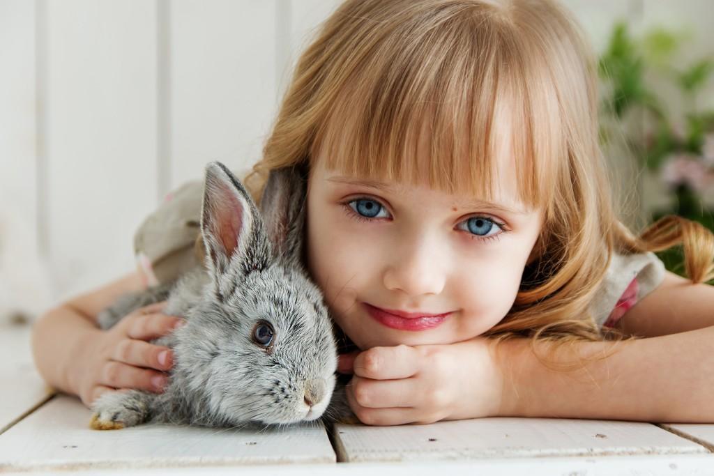 adorable-animal-attractive-1462634